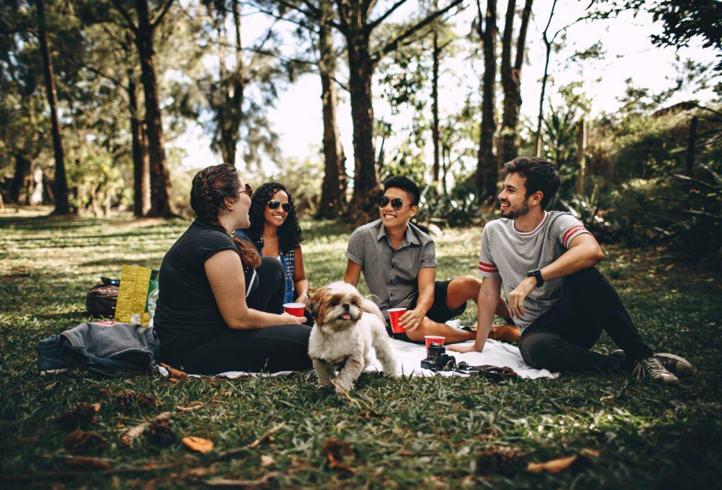 autogestao picnic pocante